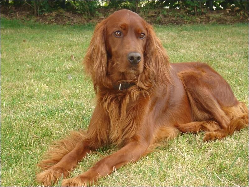 Quel est ce chien bien connu ?