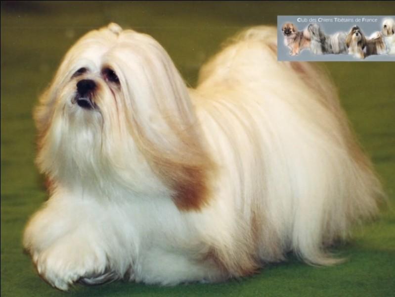 Quel est le nom de ce chien qui a la race de Pollux ?