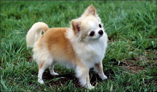 C'est le plus petit chien du monde !