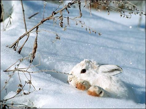 """""""Être blanc comme neige"""", veut dire..."""