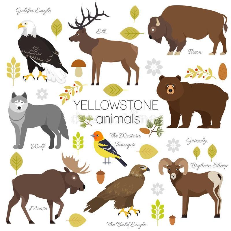 Les animaux du parc de Yellowstone