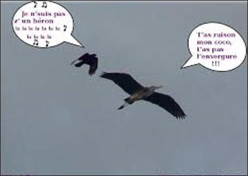 Animaux : De ces trois oiseaux, lequel est un corbeau ?