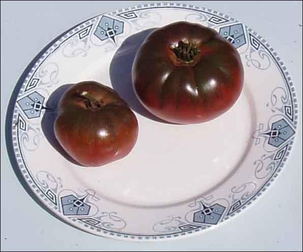 Celui-ci est presque le plus connu de ceux qui restaient dans l'ombre, depuis quelques temps. Quelle est cette variété de tomates ?