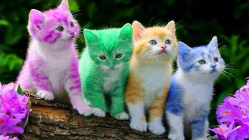 De quelle couleur serait ton pelage ?