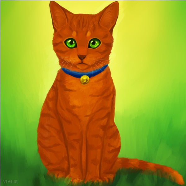 Serais-tu d'accord qu'un chat domestique intègre ton clan ?