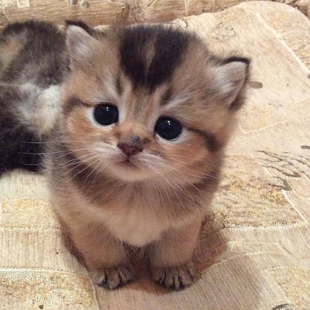 Quel chat de LGDChats es-tu ? Guerriers du clan Fruité (Partie 1)