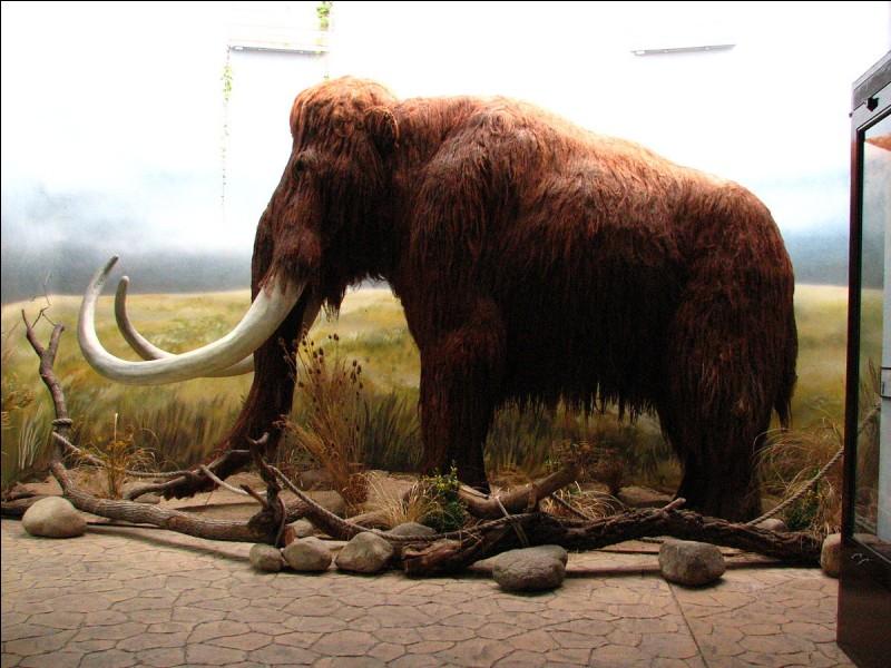 Dans cet animal préhistorique, il y a 3 :