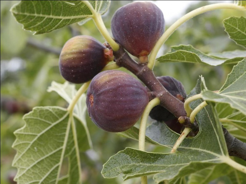 Reconnaissez-vous ces fruits qu'on peut trouver en France ?