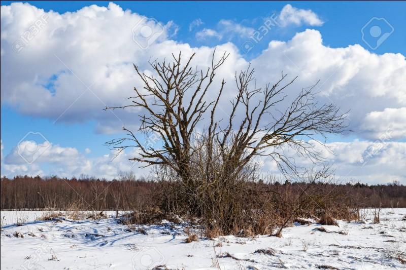 """Comment appelle-t-on la période hivernale pendant laquelle les arbres se mettent """"en sommeil"""" ?"""