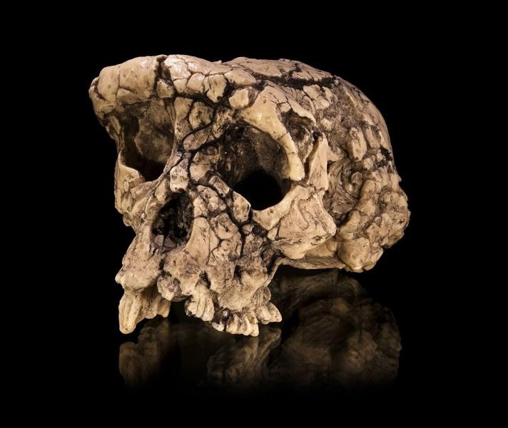 Dans quel pays a été découvert le crâne de Toumaï en 2001 ?