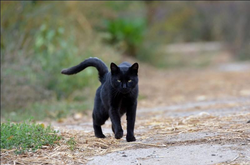 Quel était son nom de chaton ?