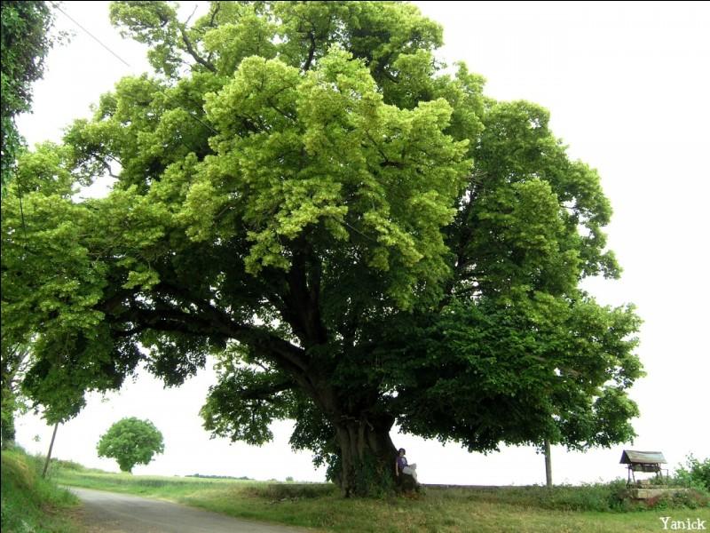 Quizz Le nom des arbres - Quiz Arbres