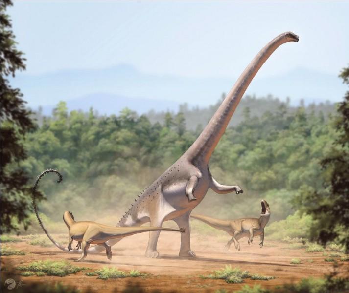 Barosaurus pesait