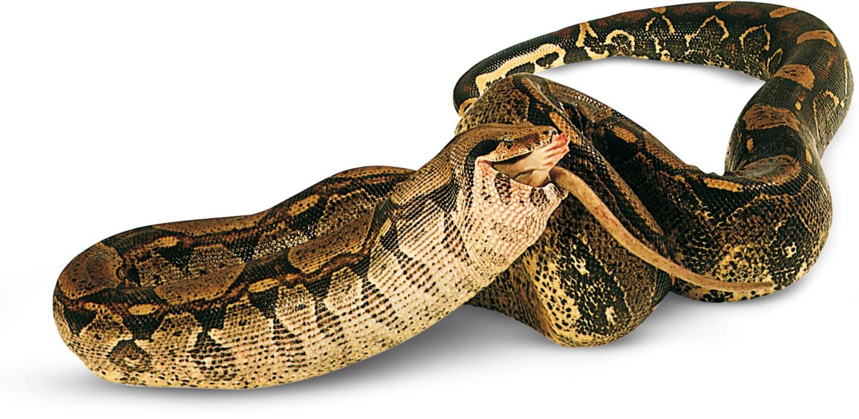 Quel reptile es-tu ?