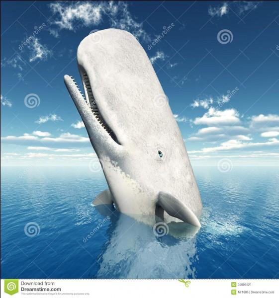 Ils partent à la chasse à la baleine, en espérant que tout baigne dans l'huile, mais un terrible cachalot n'est pas tout à fait d'accord !