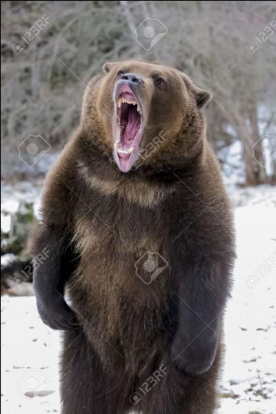 Je l'ai sauvé des griffes d'un grizzly et il est devenu mon ami, depuis nous avançons ensemble, à la queue-leu-leu !
