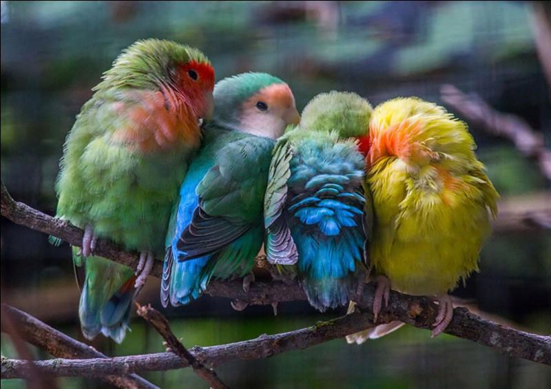 """Qui a chanté """"Fais comme l'oiseau"""" ?"""