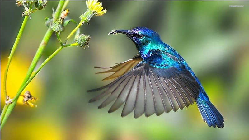 Où peut-on voir un colibri ?