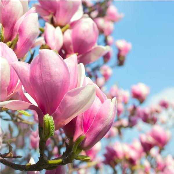 Trouvez la chanson à l'aide de la fleur !