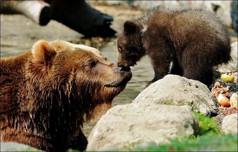 """Qui a réalisé le film """"L'ours"""" ?"""