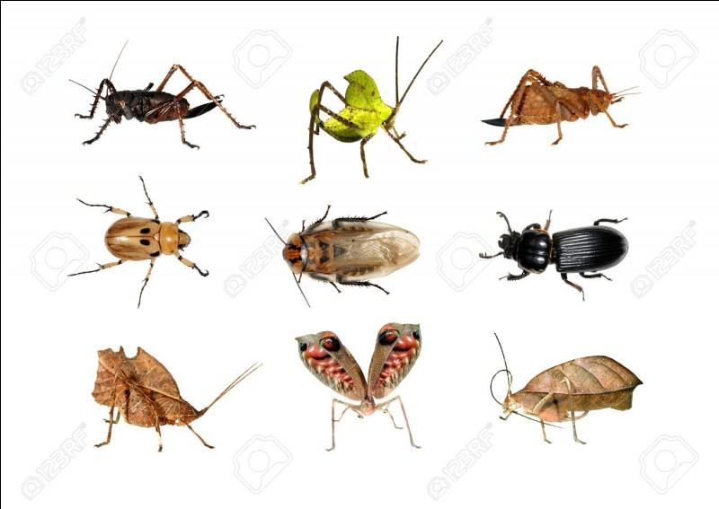 Combien d'espèces d'insectes trouve-t-on dans la forêt amazonienne ?
