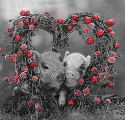 Combien étaient les petits cochons dans le livre d'Agatha Christie ?