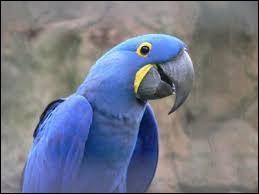 Cet oiseau bleu peut-il vivre plus de 60 ans ?