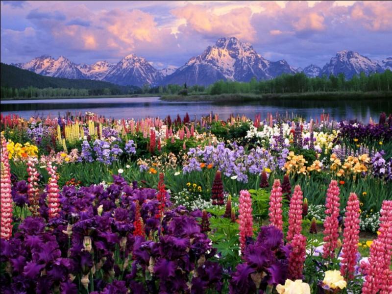 La fleur que tu aimes est...