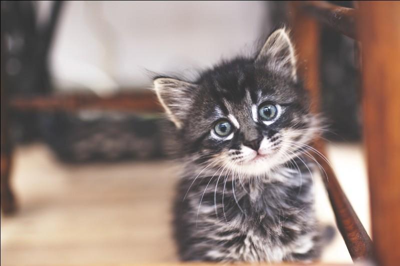 Quel chat préfères-tu ?