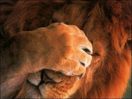 Quel animal se cache les yeux ?