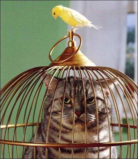 Quel animal est dedans la cage ?