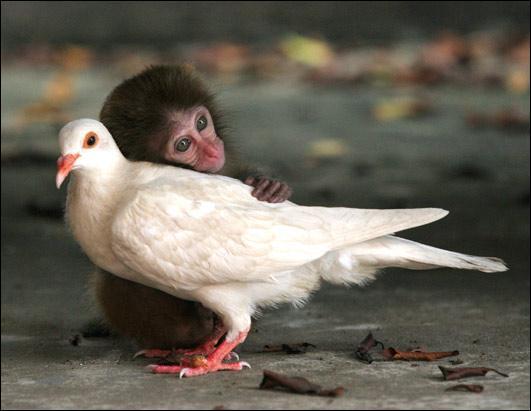 Qui fait un calin à l'oiseau ?