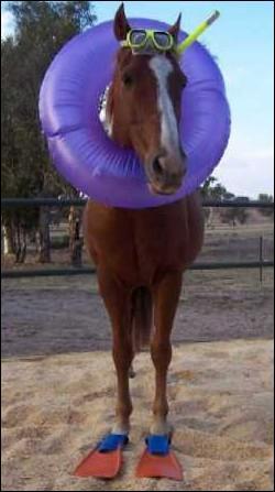 Quel animal va à la plage pour se baigner ?