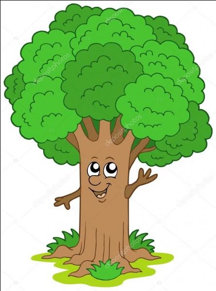 Les arbres respirent...