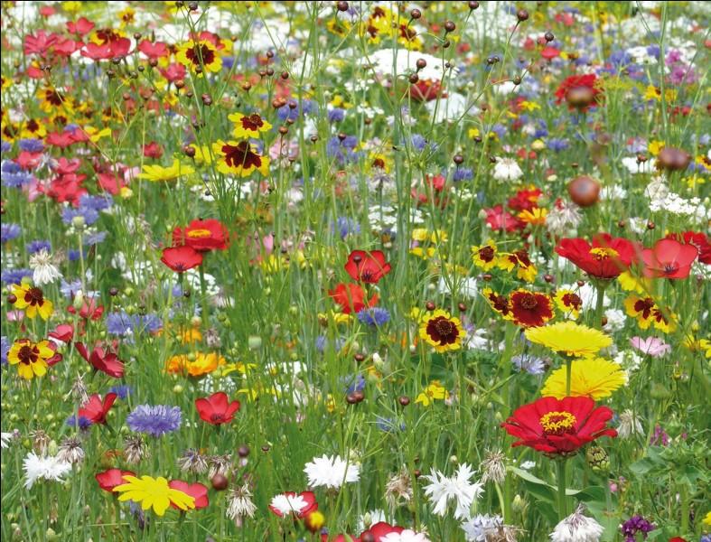 Aimes-tu les fleurs ?