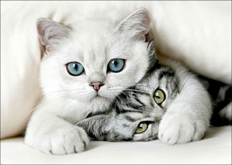 Où rencontre-t-on un chat nommé Flocon de Neige ?