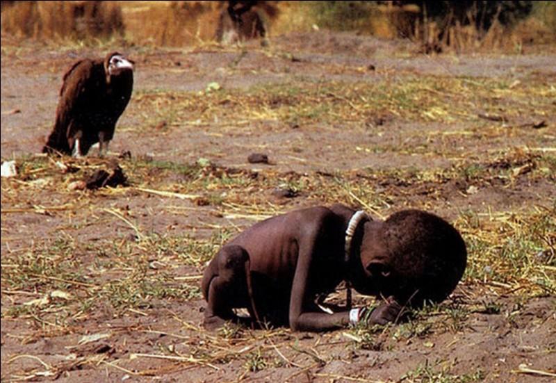 Terrible photo où l'on voit ce vautour attendre la mort de cette fillette pendant la famine au Soudan ! Le photographe recevra le prix Politzer pour cette photo. Elle provoquera un mort !Qui a payé le prix fort pour cette photo ?