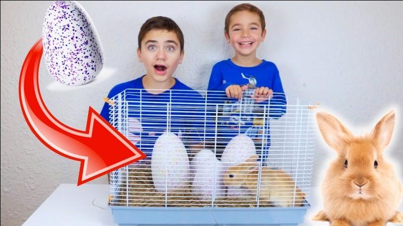 Comment s'appelle leur lapine?