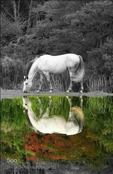 Pour qu'un fer à cheval vous porte bonheur, où doit être son ouverture ?