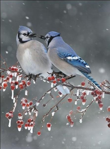 """Dans les années 60, qui chantait """"J'entends les oiseaux qui chantent, à la ferme du bonheur"""" ?"""