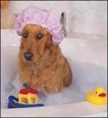 Qui prend un bain ?