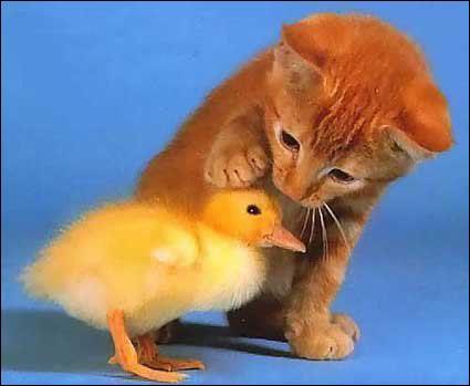 Le petit chat roux pose sa patte sur :