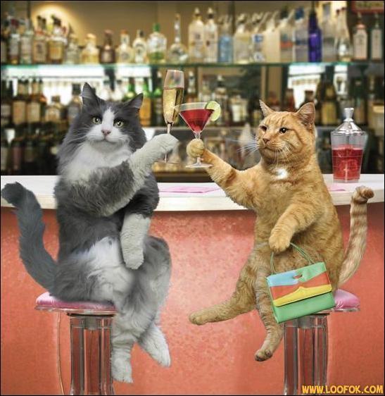Quels animaux tiennent un verre ?