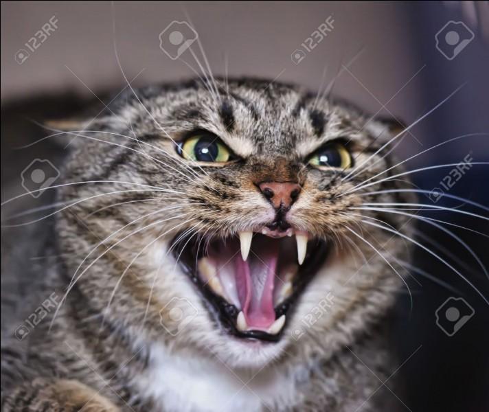 Quelle est l'humeur de ce chat ?