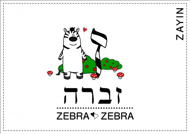 Z - ''Zayin'', la septième lettre de l'alphabet hébreu a donné naissance au Z de l'alphabet latin.