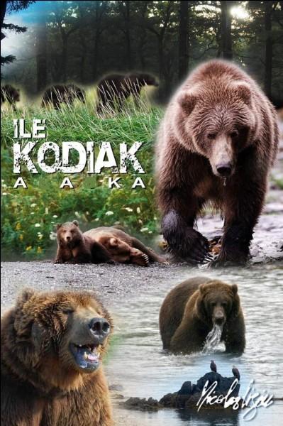 K - Le ''kodiak'' vit au Groenland.