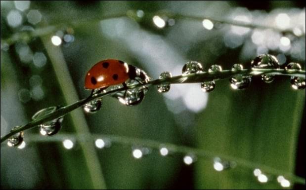 M - ''Microcosmos, le peuple de l'herbe'' est un film consacré aux insectes.