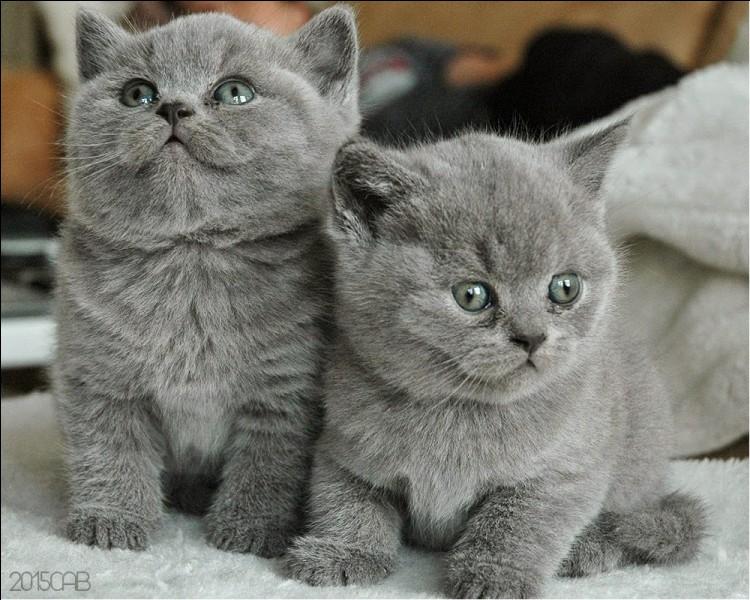 Quel est le nom de chaton d'Etoile Bleue ?