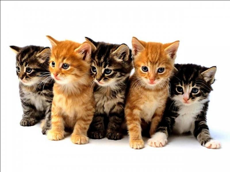 Quelle image préfères-tu en tant que chat ?
