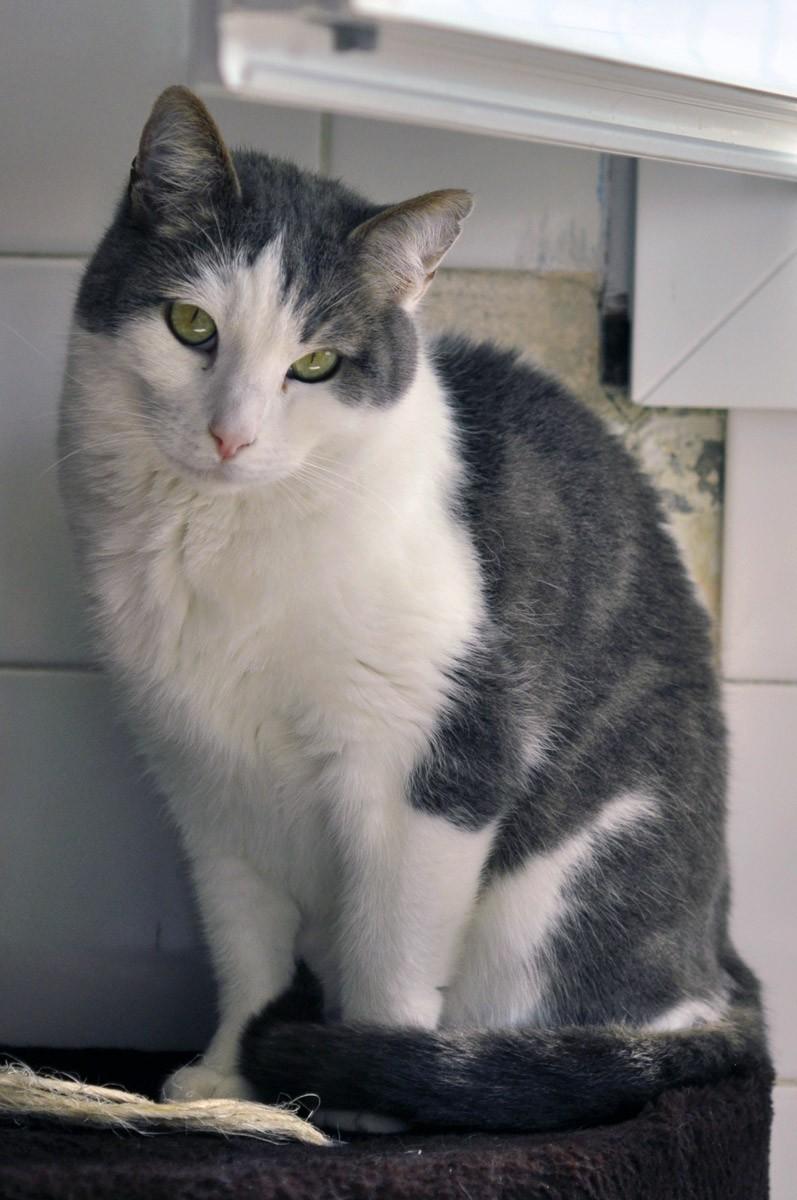 Quel type de chat es-tu ?